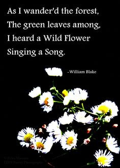 flower quotes book quotes and booky th blake quotes poetry quotes ...