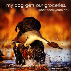 Hunting dogs: a southern belle's best friend.