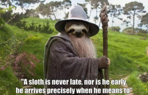 Funny Sloth Pictures With Quotes A sloth is never late