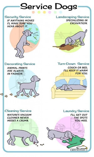 service dog :) Unloading the dishwasher and folding clothes would be a ...