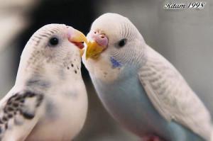 love birds love birds love birds