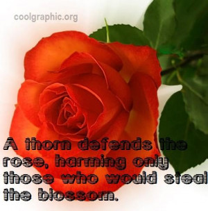 Thorn Defends The Rose - Rose Quote Graphic