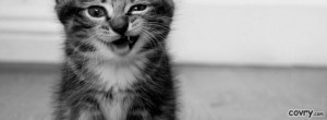 facebook covers funny kitten cover