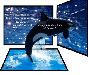 Quote Albert Orcas Whales