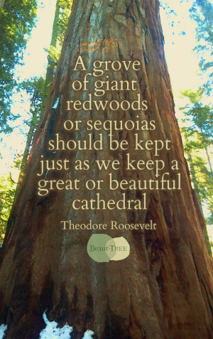 ... kept just as we keep a great or beautiful cathedral - Teddy Roosevelt