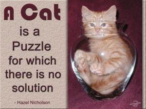 Cat Quotes Graphics, Pictures