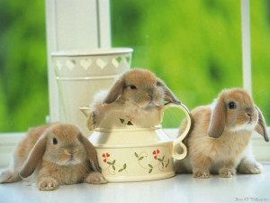 think there's an aBUNdance of bunnies!