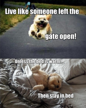 ... Funny dog picture appeared first on Jokideo // Funny Pictures & Funny