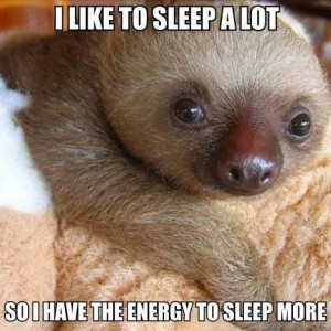 | If you love cute quotes about life, sleep, or adorable baby sloths ...