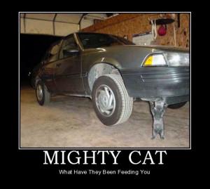 car-humor-funny-joke-road-street-driver-mighty-cat