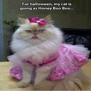 For halloween my cat is going as honey boo boo