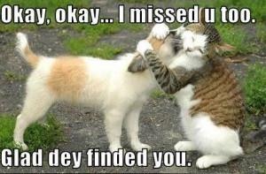 Cute: Cat Hugging Dog