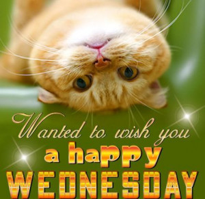 cute hump day | happy wednesday quotes cute wednesday hump day