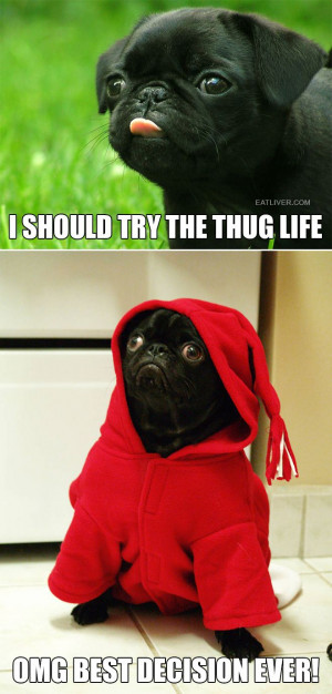 Crazy #Funny Pictures #pug #thuglife
