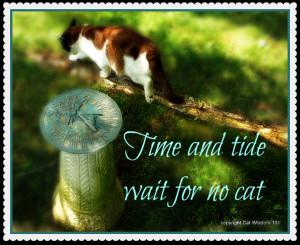 time-quote-summer-solstice-cat-sundial