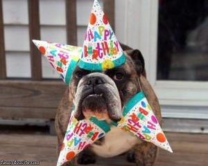 Happy_Birthday_Dog