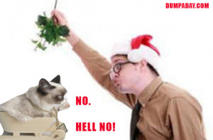 with christmas cat funny cats at christmas funny grumpy cat grumpy cat ...