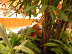 Task 14: Hide Behind a Bush