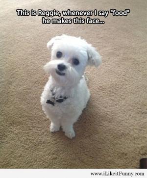 cute-dog-call-food-face