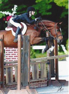 Hunter jumper eventing horse equine grand prix dressage equestrian ...