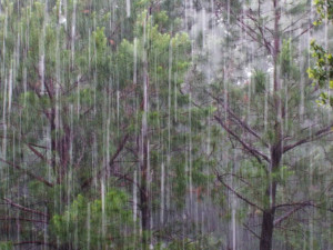 Rainy Day Quotes With Images For Facebook