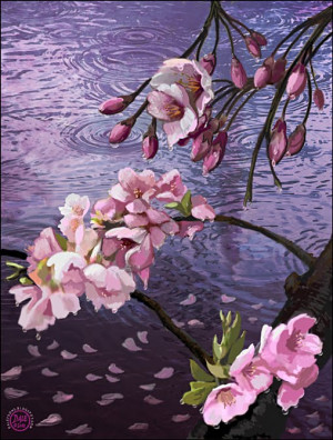 Cherry Blossoms and Rain