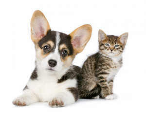 Puppies And Kittens Quotes #8