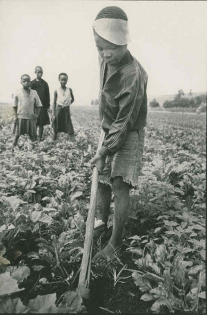 Industrial Revolution Child Labor Newsboys