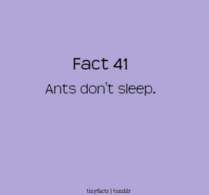 Fact Quote : Ants Don't Sleep