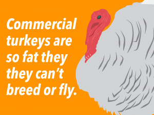 13-sad-sad-facts-about-your-thanksgiving-turkey.jpg