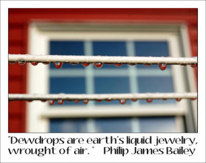 Dewdrops quote . . .
