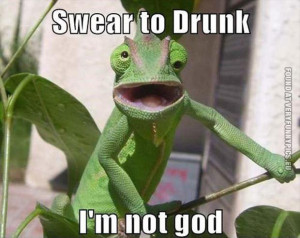 Funny Pictures | animals | Drunk chameleon