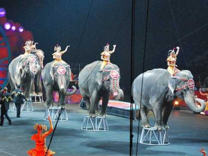 circus-conglomerate-scores-a-major-settlement-in-animal-abuse-case.jpg