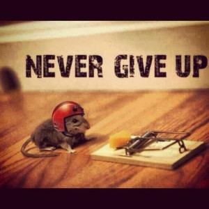 ... cute-pictures-never-give-up-quote-motivational-quotes-pics-600x600.jpg