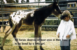 Horse love quotes wallpapers