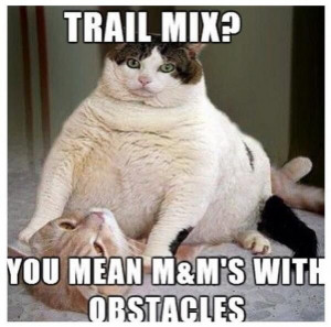 funny fat cat trail mix you mean m m s with obstacles