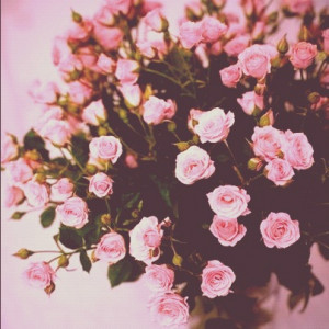 Pink Flowers Tumblr Quotes Garden of pink roses