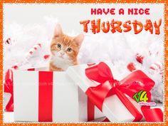 Happy Thursday Funny Sayings | thursday Scraps,thursday Sms,thursday ...