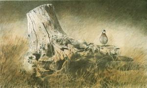 Bobwhite Quail Paintings