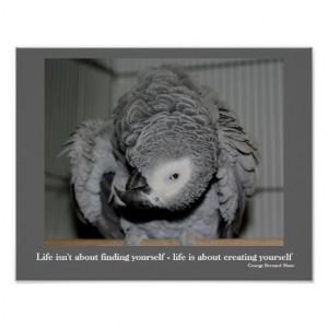 parrot quotations
