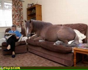 Horse Hair Pillow