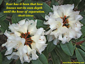 you find great value in these separation quotes and sayings