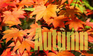 Top 10 Best Autumn Quotes