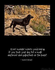 Dog's Life 11x14 Poster Art Print - black labrador photo - robert ...
