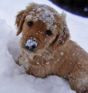 Yay! No school today! Let's play in the snow!