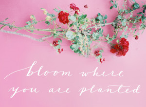 Bloom Where You Are Planted - Flower Quote