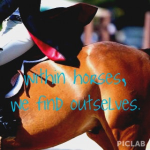 equestrian #quote #horse #farm #hunter #jumper #showjumping #showing ...
