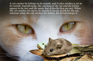 Cat Pictures With Quotes Cat quotes