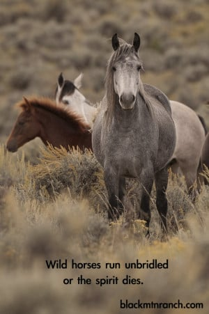 Horse Quotes About Love Wild horses run unbridled or