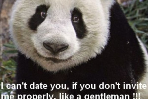 Funny Panda Quotes